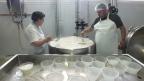 Nach der Käseproduktion wird Quark gemacht.